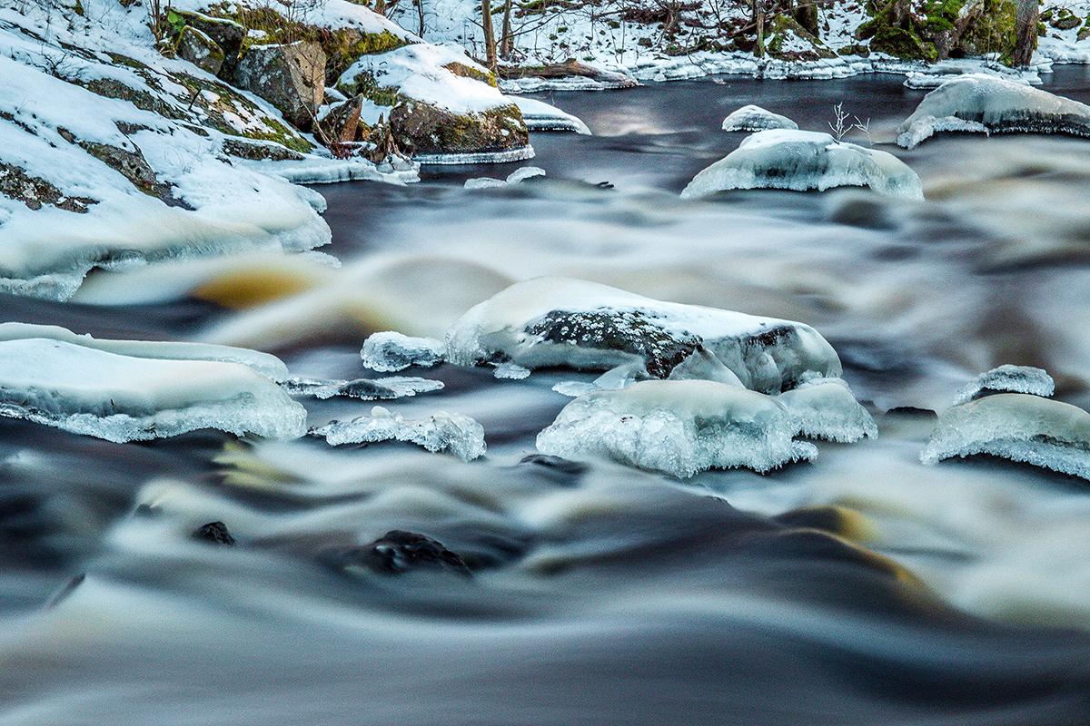 Dalby Söderskog fyller 100 år som nationalpark